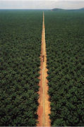 Treefarms